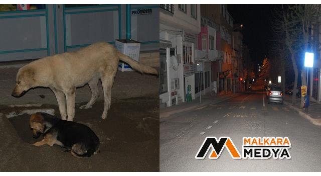 Malkara sokakları boşaldı, köpekler özgürce oyun oynadı
