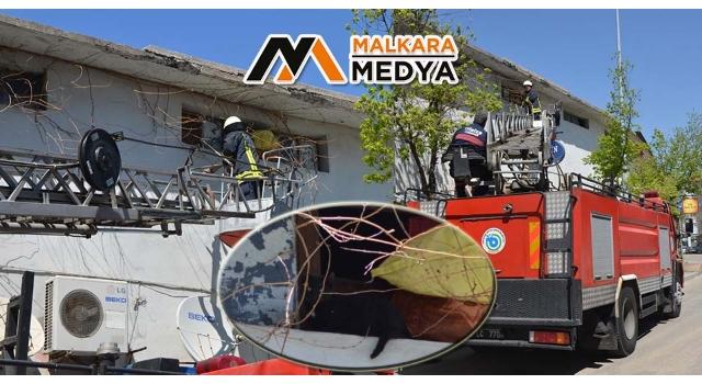 Malkara'da çatıda mahsur kalan kedi kurtarıldı