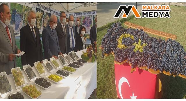 Türkiye'de hiçbir yerde olmayan üzümler bu şenlikte sergilendi