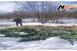 Karda aç kalan yaban hayatına 1 buçuk ton yem bırakıldı