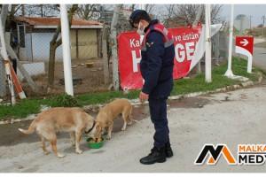 Malkara'da Jandarmadan uygulama sırasında yanına gelen köpeğe şefkat
